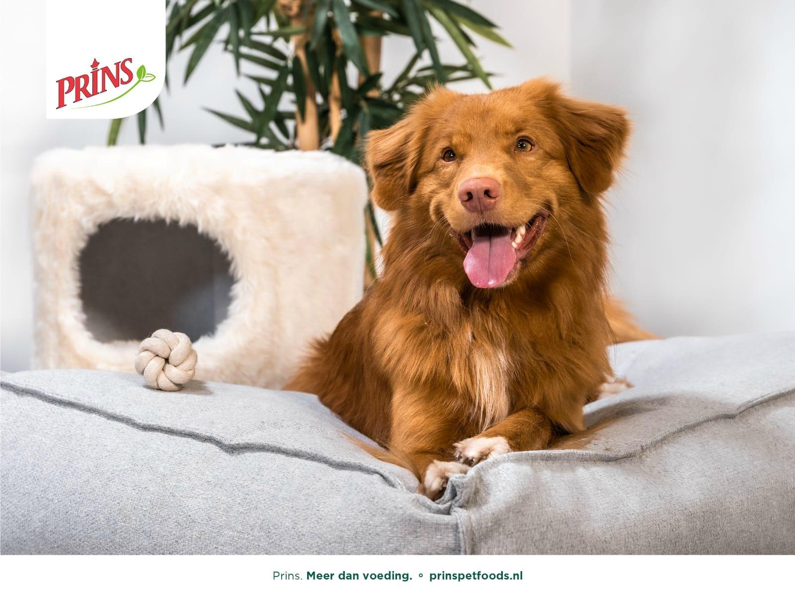 prinsvoeding hond en kat- kynostars